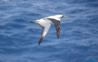 Karibik 19.04.09 - Strände der Karibik über den Atlantik AIDAperla 012